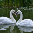 Swans — Stock Photo #40748505