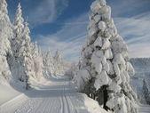 Snow in black forest — Stock fotografie