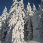 Winter dream — Stock Photo