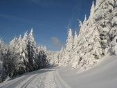 冬天的梦 — 图库照片