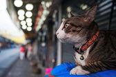 Кошка на обочине — Стоковое фото