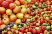 トマトのグループ — ストック写真