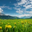 Meadow with dandelions and tyrol mountains at blue sky — Stock Photo