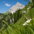 Steep green mountain meadow — Stock Photo