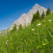 Steep mountain meadow — Stock Photo