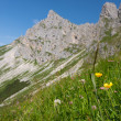 Stock Photo: Steep green alp meadow