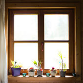 Wooden window with flowers on ledge — Stock Photo