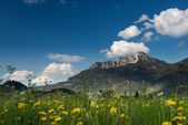 Yellow flowers in front of huge mountain in tyrol — Stock Photo