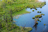 Top view to swamp at lake with arid trees and grass — Stock Photo