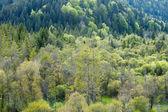 Ver os monte de agulha verde e árvores de folha caduca — Fotografia Stock