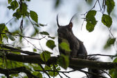 Brown squirrel on limb of tree — Stock Photo