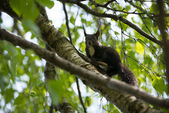 Curious brown squirrel in limbs of tree — Stock Photo
