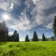 Several trees with mountain meadow clouds and sun beams at cloudy sky — Stock Photo #34822835