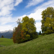 Two trees at autumn on hill with meadows, mountains and cloudy sky — Stock Photo #34825083
