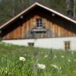 Idyllic wooden hut with fresh green grass in front and flowers — Stock Photo
