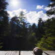 edible snail lying on wooden planks with trees and sun and  blue sky in the back  — Foto de Stock