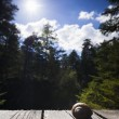 edible snail lying on wooden planks with trees and sun and  blue sky in the back  — Foto Stock