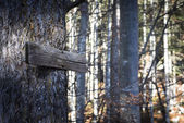 Old wooden direction sign guides the way threw the forest in fall — Zdjęcie stockowe