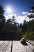 Eetbare slak liggend op houten planken met bomen en zon en blauwe hemel in de rug — Stockfoto