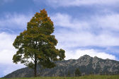 Single tree on top of hill with moutain and sky — Stock Photo