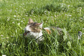 Young cat hides between high fresh green grass and lot of spirng flowers — Stock Photo