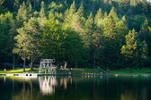 Diving platform at swim lake in midden of green forest and nature — 图库照片