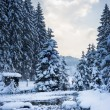 Cold winter snow landscape at river with trees and sky — Stock Photo