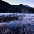 Mystic swamp near forest on a cold winters day — Stock Photo