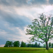 Single tree at sunset at green meadow — Stock Photo