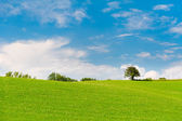 Green meadow with trees at horizon — Stock Photo