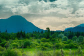 Green forrest meadow in front of mountain with cloudy sky — Foto de Stock