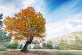 Colorful linden tree on alp meadow at fall — Stock Photo