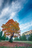 Autumn tree with red and orange leafs at mountain meadow — Stock Photo