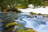 Rural river with motion of flowing water over moss and rocks in forest — Stock Photo