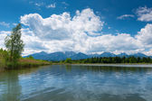 Lake hopfen am see with reeds and sunny blue sky with clouds — Stock Photo