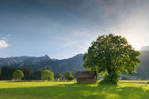 Back light of sun with linden tree and hut at tyrolean alp meadow — Stock Photo