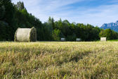 Several hay bale at fresh mowed meadow in rural alp scene — Stock Photo