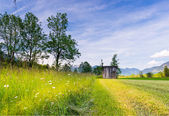 Mowed grass at rural tyrol meadow with old wooden hut in spring — Stock Photo