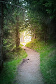 Road path goes to sunlight at the end of the forest tunnel — Stock Photo