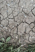 Cracked chappy earth because of dry weather without rain — Stock Photo