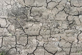 Dry rusty earth bottom at waterless summer texture background — Stock Photo
