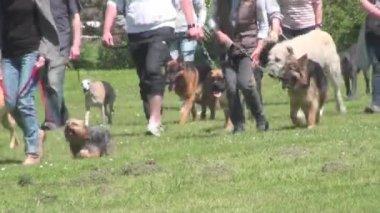 Dog at a dog training — Vídeo stock