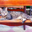 Cute cat lying on a bench — Stock Photo