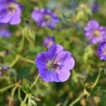 Blumen — Stock Photo #34395135