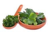 A spoon and saucer of parsley — Stock Photo