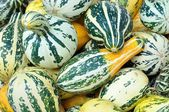 Texture of green yellow striped pumpkins — Stock Photo