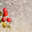 Briar, wild rosehip shrub with blurred stone in background — Stock Photo