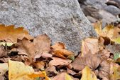 Detail of brown fallen autumn leaves and stone — Stock Photo