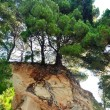Pine tree on rock in Podgora, Croatia — Stock Photo