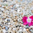 Pink flower on colorful beach pebbles for background — Stock Photo